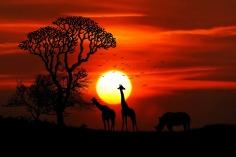 africa-2265801_960_720
