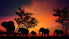 elephant-2231690__340